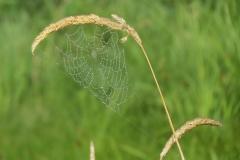 2018 EJ Gracie 023_spiderweb2