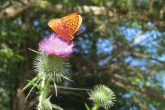 2018 EJ Gracie butterfly