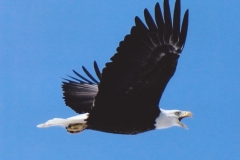 Dan McKinnon  Bald Eagle Over the Jordan