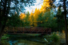 Gaye hott - pinney bridge with tamarack trees!